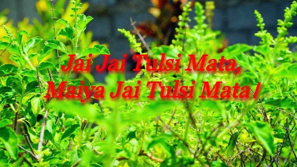 Jai Jai Tulsi Mata, Maiya Jai Tulsi Mata।
